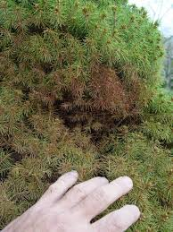 native plants alberta bottom 10 shrubs garden housecalls