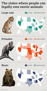where it u0027s legal to own exotic animals like monkeys business insider