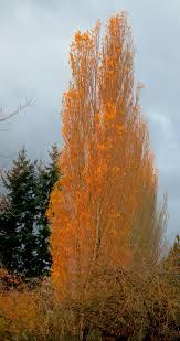 rekindling the burning bush u2013 barnstorming