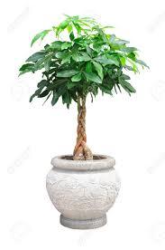 houseplants stock photos u0026 pictures royalty free houseplants