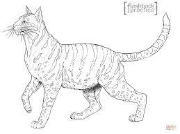 wildcat coloring page andean mountain wildcat coloring page free