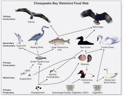 what is a food web definition u0026 explanation video u0026 lesson