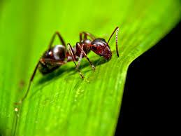 prepare for the zombie apocalypse u2026 if you u0027re an ant u2013 yugenometry