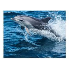 unique dolphin gifts unique dolphin gifts on zazzle