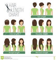 hair length chart stock vector image 71534057