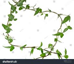 border frame made green climbing plant stock photo 149591993