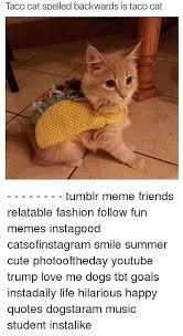 Cat Memes Tumblr - taco cat spelled backwards is taco cat tumblr meme