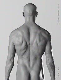 The Human Anatomy Muscles Anatomytools Com