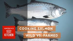 science how wild salmon differs from farmed salmon and how to
