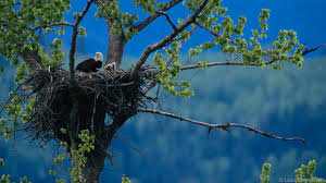 bbc earth the 16 most amazing nests built by birds