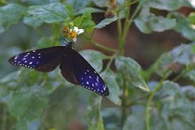 walking with the butterflies in s maolin valley