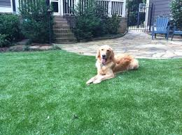 Artificial Grass Las Vegas Synthetic Turf Pavers Softlawn Pet Turf Fake Grass For Dogs Synthetic Turf