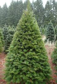 douglas fir christmas tree ace hardware get a fresh christmas tree for 13 only on saturday