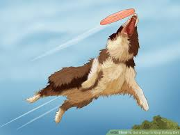 royal 8 australian shepherds how to get a dog to stop eating dirt with pictures wikihow