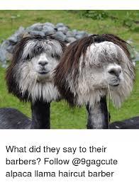 Alpaca Memes - 25 best memes about alpaca alpaca memes