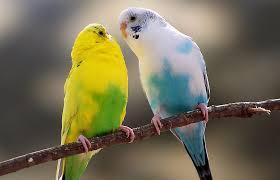 birds images Birds images jpg