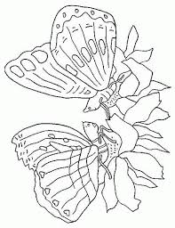 kids n fun com 56 coloring pages of butterflies