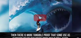 biggest megalodon shark interesting facts largest shark in the world megalodon scoopverbia