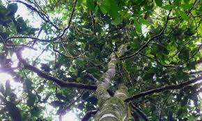 name a new tree species from tanzania while fundraising for