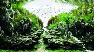 japanese aquascape aquascaping qualifyings for the art of planted aquarium 2015