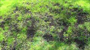 how to level uneven spots in your lawn diy lawn care youtube