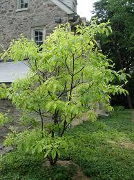 native pennsylvania plants pennsylvania garden housecalls