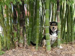 Landscape Nurseries Near Me by Bamboo Garden Nursery