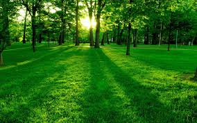sunlight l for plants wallpaper sunlight trees landscape forest nature grass park