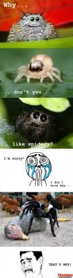 Cute Spider Meme - they re still super cool randomness pinterest spider