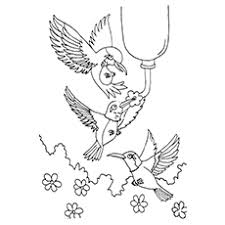 10 hummingbird coloring pages toddler