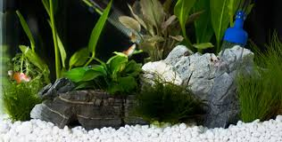 How To Clean Fish Tank Decorations Interpet Aquarium Decoration Gravel And Fish Tank Ornaments