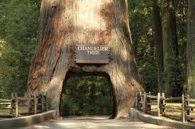 Chandelier Tree California Chandelier Tree Mapio Net Pleasant Pics Redwood California
