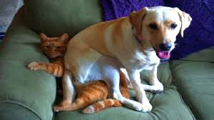 Cat Sitting Meme - dogs sitting on cats collection youtube