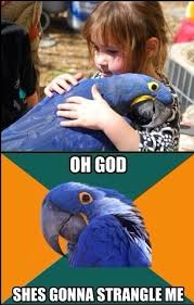 Paranoid Parrot Memes - paranoid parrot goes to the petting zoo meme guy