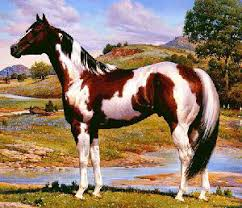 breeds of livestock paint horses u2014 breeds of livestock