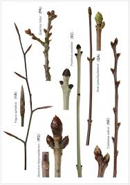 plants native to uk the vegetative key to the british flora a new approach to plant