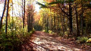 thanksgiving fall pictures muskoka october 8th and 10th 2011 thanksgiving fall scenes of