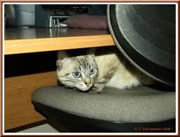 cachee bureau a cache cache sous le bureau c est comme