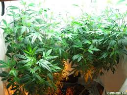 Plants That Dont Need Light Fluorescent Lights Appealing Fluorescent Light And Plants 51