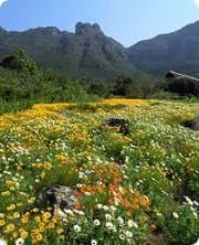 Kirstenbosch Botanical Gardens Kirstenbosch National Botanical Gardens Cape Town