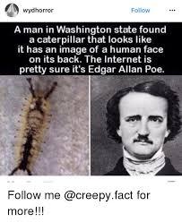 Edgar Allen Poe Meme - wydhorror follow a man in washington state found a caterpillar that