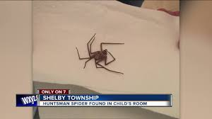 giant spider found in child u0027s room youtube