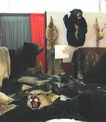 How Much Does A Bear Rug Cost Real Bear Skin Rugs U0026 Animal Taxidermy For Sale Bill U0027s Bear Rugs