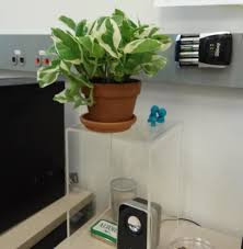 Plant For Desk Indoors Is There A Way I Can Keep My Plant Off Of My Desk