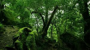 thick forest tree branches stones branch moss green flowers hd