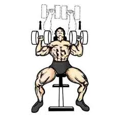 Flat Bench Press Dumbbell Index Of Weight Lifting Exercise Poze Cest