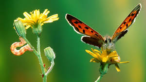 cool butterfly hd wallpapers 1080p in wallpapers image with