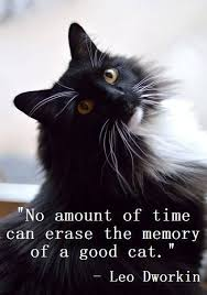 Awesome Quotes About Cats Being - 71 best cat sayings and quotes images on pinterest kitty cats