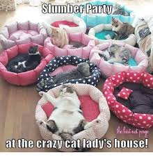 Crazy Cat Lady Memes - 25 best memes about crazy cat lady crazy cat lady memes