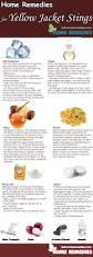 best 25 yellow jacket bee ideas on pinterest yellow jacket trap